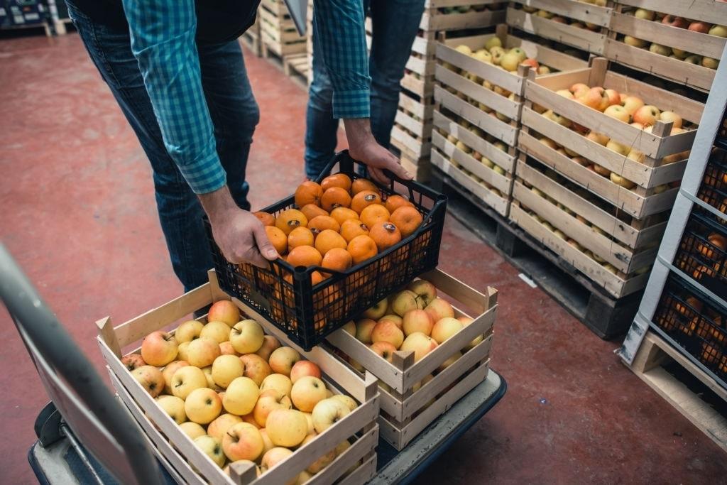 Tại kho lạnh, hoa quả từ lô lớn được chia nhỏ và đưa đi đóng gói